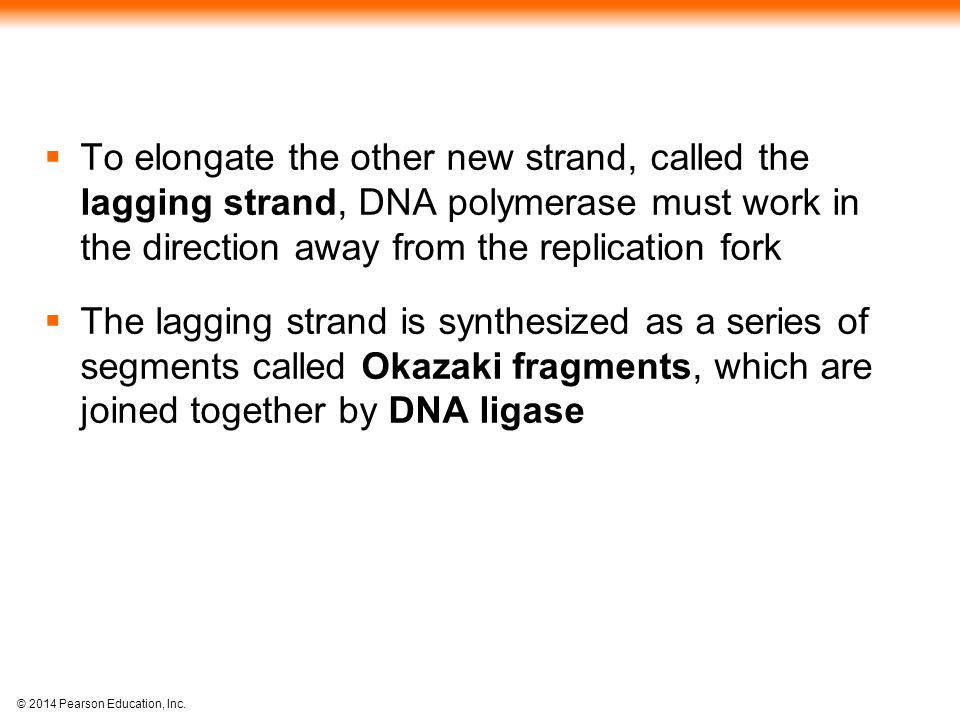 © 2014 Pearson Education, Inc.  To elongate the other new strand, called the lagging strand, DNA polymerase must work in the direction away from the