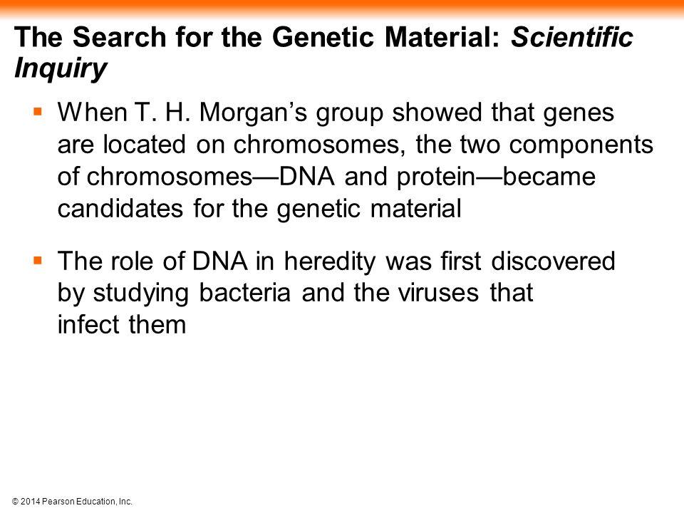 © 2014 Pearson Education, Inc.Figure 16.16c-3 DNA ligase forms bonds between DNA fragments.