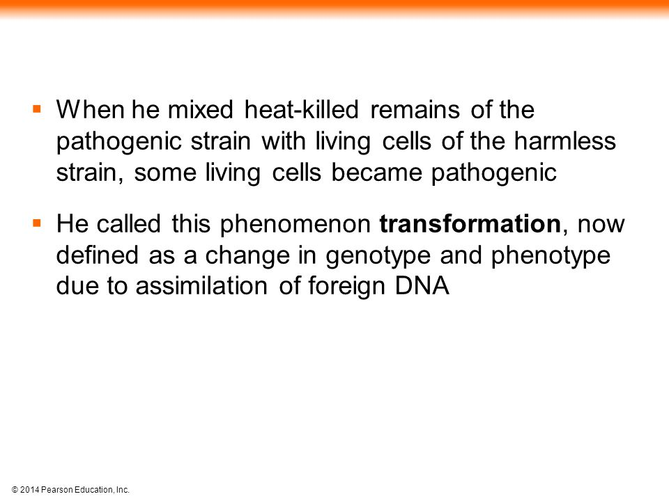 © 2014 Pearson Education, Inc.  When he mixed heat-killed remains of the pathogenic strain with living cells of the harmless strain, some living cell