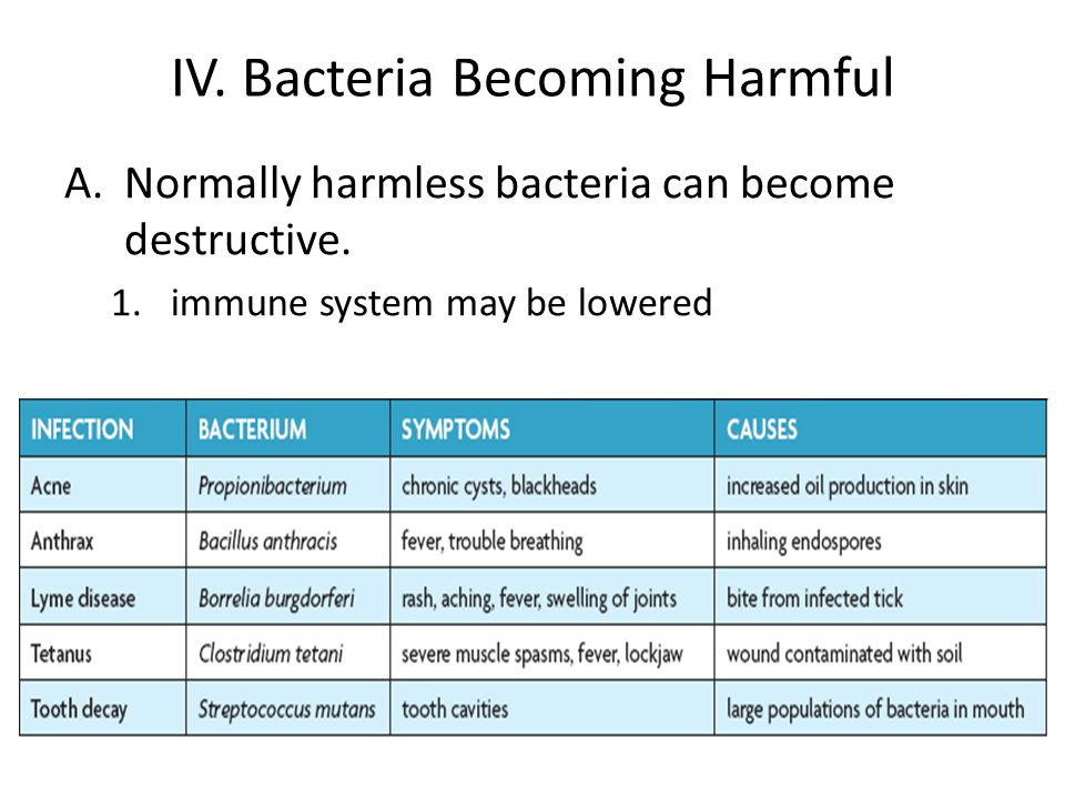 IV. Bacteria Becoming Harmful A.Normally harmless bacteria can become destructive.