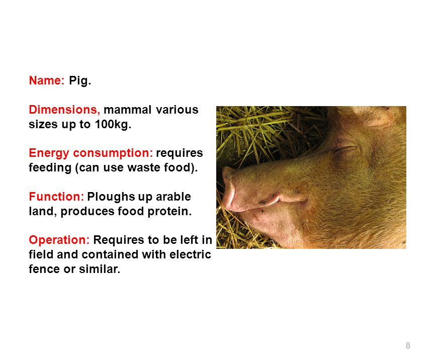 8 Name: Pig. Dimensions, mammal various sizes up to 100kg.