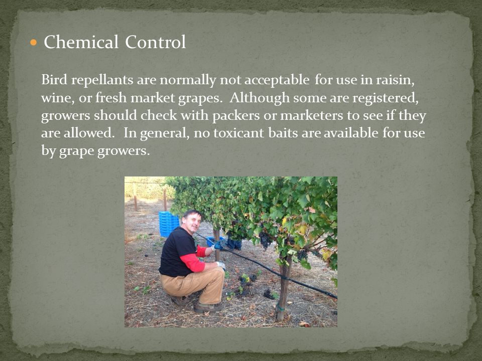 Chemical Control Bird repellants are normally not acceptable for use in raisin, wine, or fresh market grapes.