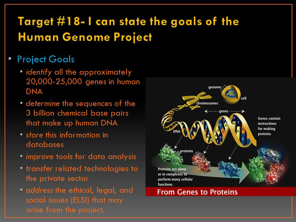 Project Goals identify all the approximately 20,000-25,000 genes in human DNA determine the sequences of the 3 billion chemical base pairs that make u