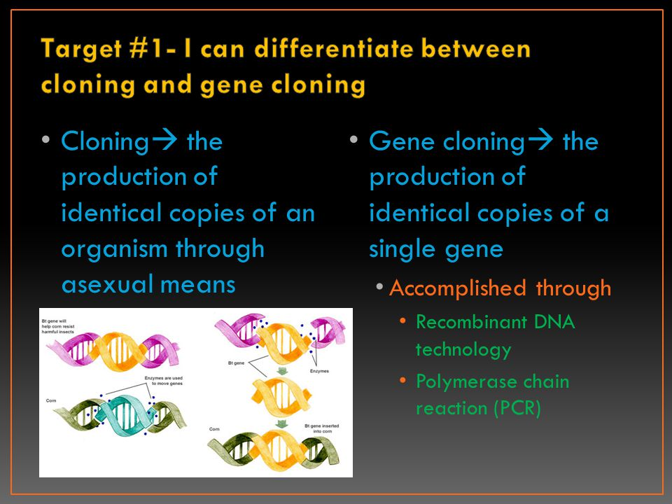 Reasons for gene cloning Produce large quantities of a gene's protein product Ex: insulin Learn how a cloned gene codes for a particular protein Use the genes to alter the phenotypes of other organisms in a beneficial way When used to modify humans it's referred to as gene therapy Organisms with foreign DNA or genes inserted into them are called transgenic organisms