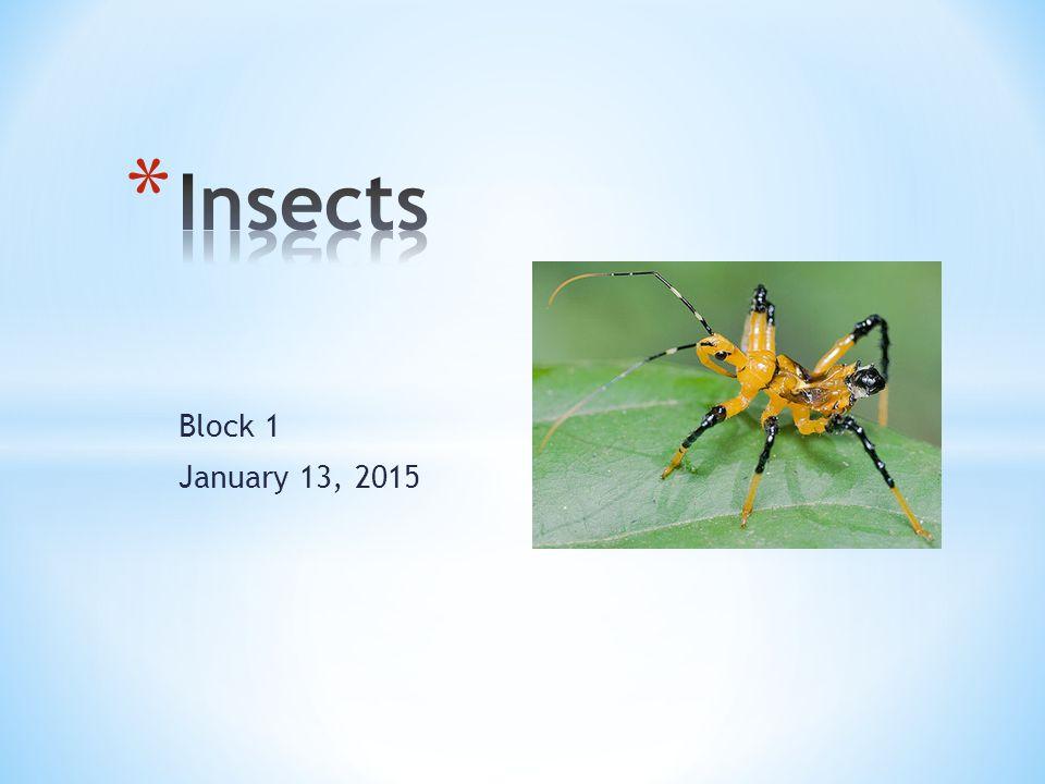 Block 1 January 13, 2015