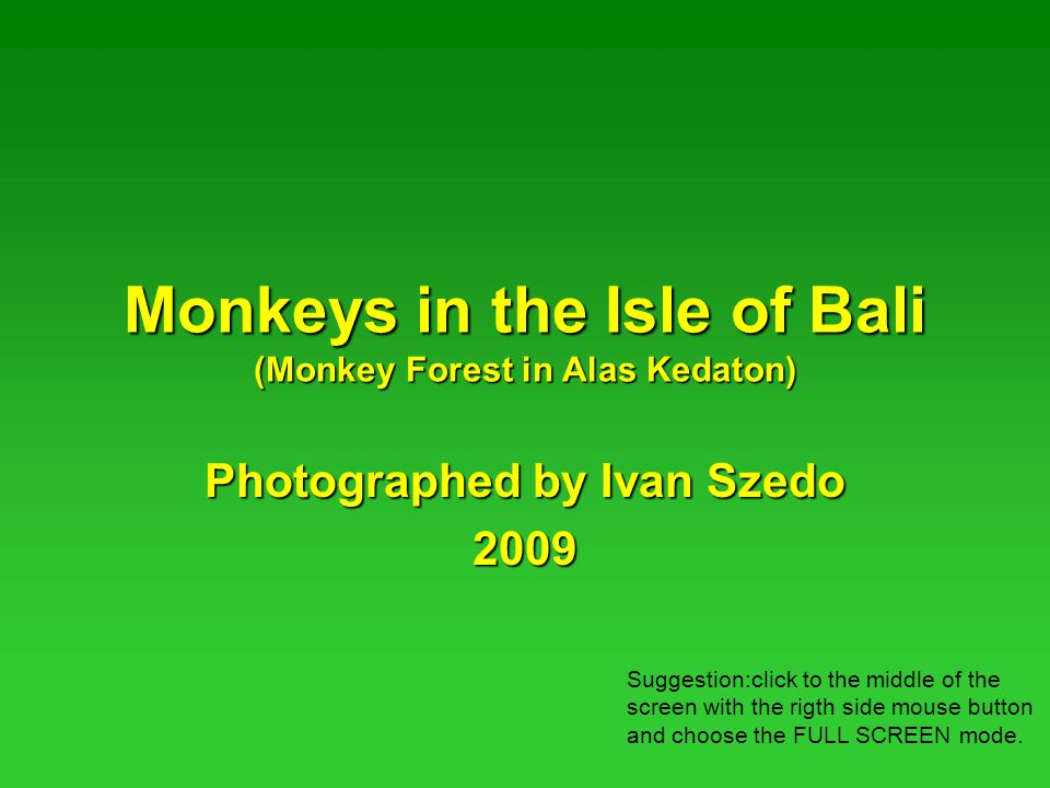Monkeys in the Isle of Bali (Monkey Forest in Alas Kedaton) Photographed by Ivan Szedo 2009 Suggestion:click to the middle of the screen with the rigth side mouse button and choose the FULL SCREEN mode.