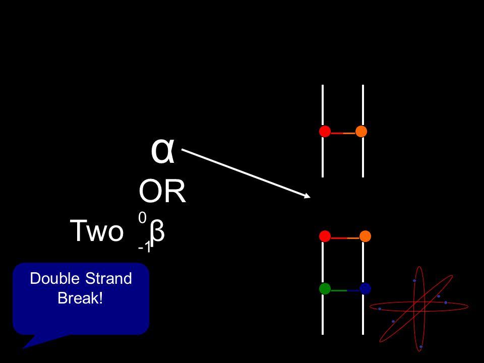α Double Strand Break! Two β OR 0