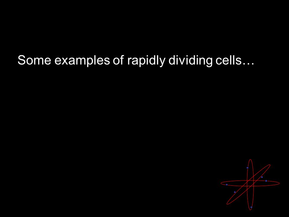 Some examples of rapidly dividing cells…