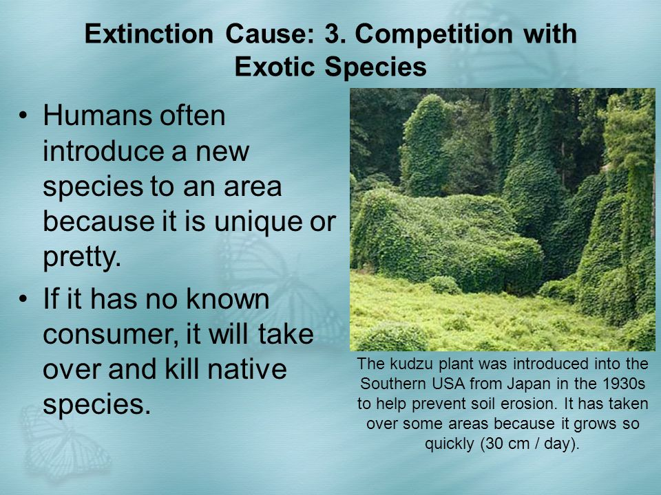 Extinction Cause: 3. Competition with Exotic Species The kudzu plant was introduced into the Southern USA from Japan in the 1930s to help prevent soil