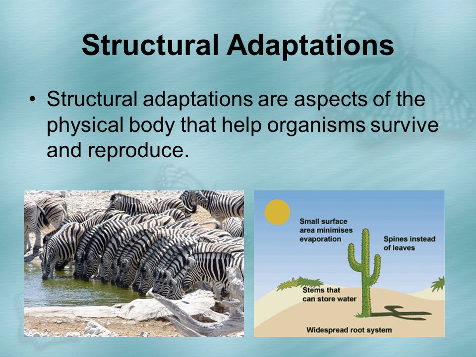 Structural Adaptations Camouflage is coloring that blends with the environment, and makes organisms difficult to see.