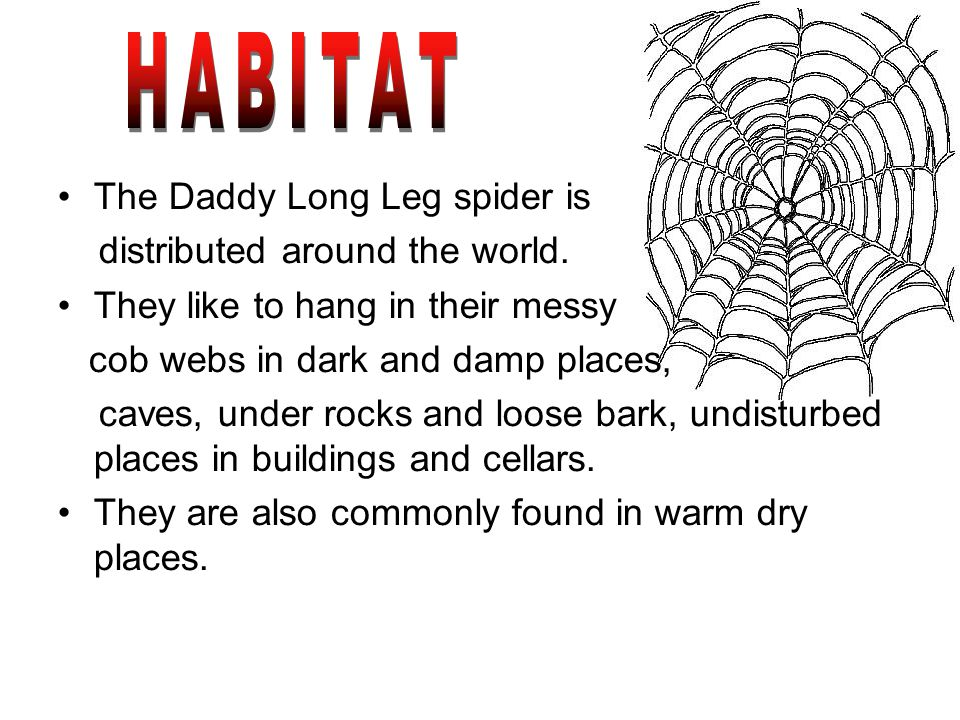 The Daddy Long Leg spider is distributed around the world.