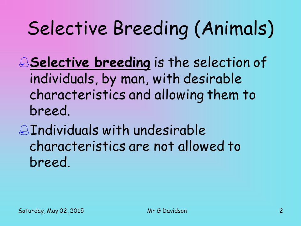 Saturday, May 02, 20152Mr G Davidson Selective Breeding (Animals)  Selective breeding is the selection of individuals, by man, with desirable characteristics and allowing them to breed.