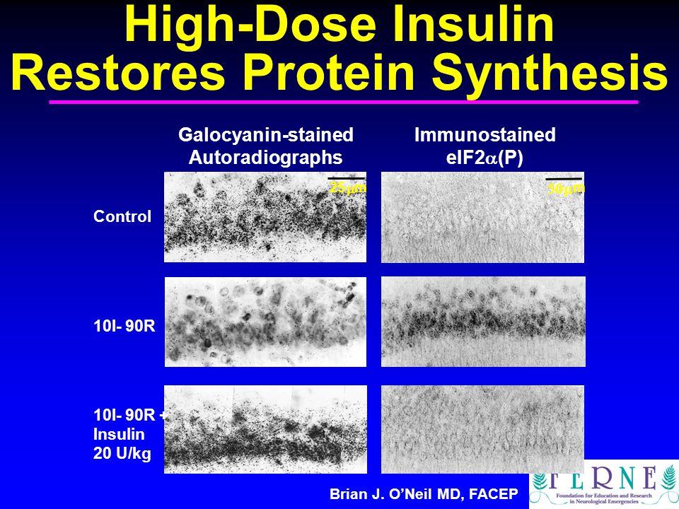 Brian J. O'Neil MD, FACEP Galocyanin-stained Autoradiographs Immunostained eIF2  (P) Control 10I- 90R 10I- 90R + Insulin 20 U/kg 25  m  m High-Do