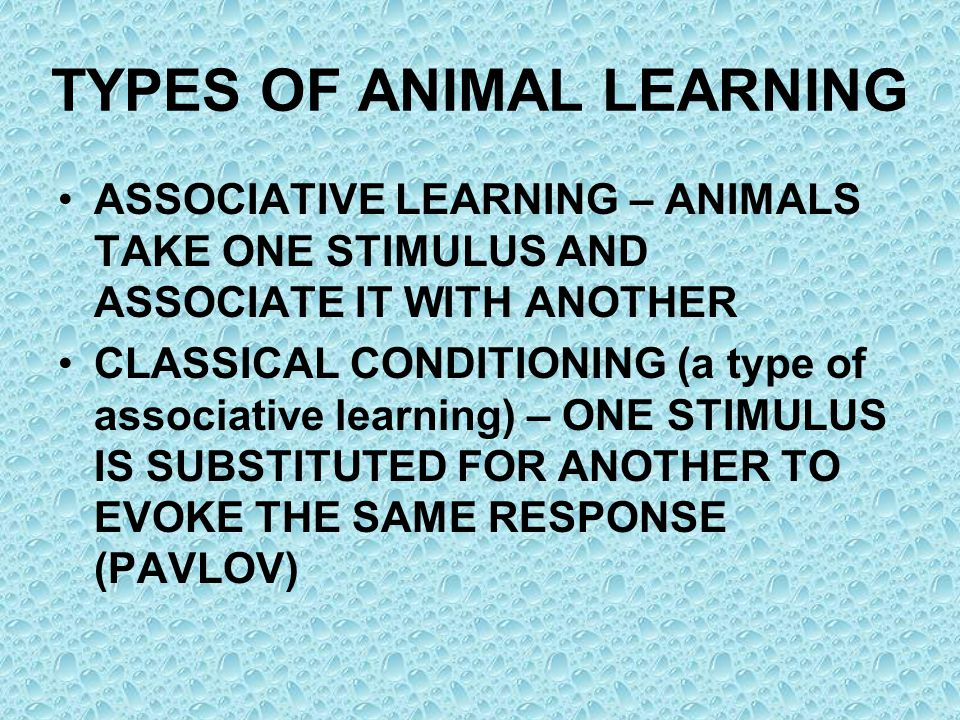 TYPES OF ANIMAL LEARNING ASSOCIATIVE LEARNING – ANIMALS TAKE ONE STIMULUS AND ASSOCIATE IT WITH ANOTHER CLASSICAL CONDITIONING (a type of associative