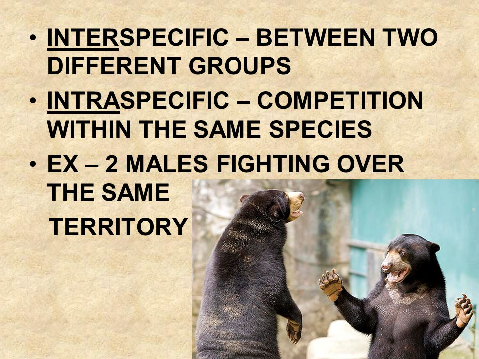 INTERSPECIFIC COMPETITIONS OCCURS WHEN RESOURCES ARE IN SHORT SUPPLY A -/- INTERACTION BETWEEN THE SPECIES INVOLVED 2 CONCEPTS COMPETITIVE EXCLUSION PRINCIPLE NICHES