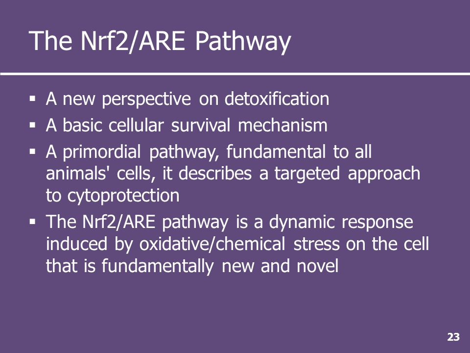 The Nrf2/ARE Pathway  A new perspective on detoxification  A basic cellular survival mechanism  A primordial pathway, fundamental to all animals cells, it describes a targeted approach to cytoprotection  The Nrf2/ARE pathway is a dynamic response induced by oxidative/chemical stress on the cell that is fundamentally new and novel 23