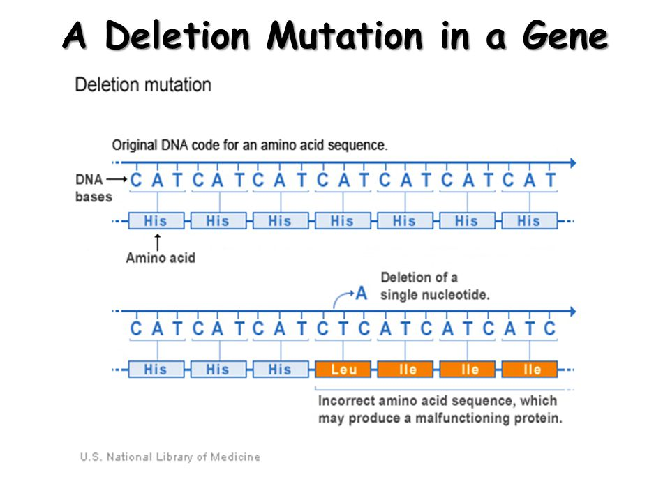 A Deletion Mutation in a Gene