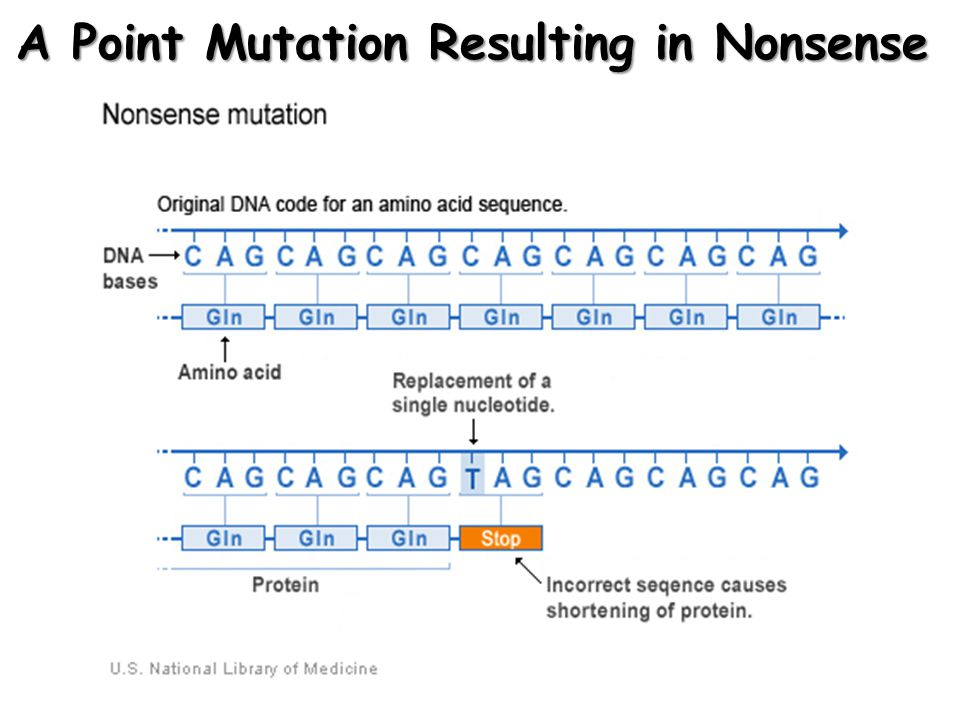 A Point Mutation: An Analogy t h e r e d d o g b i t t h e t a n c a t t h e r e d m o g b i t t h e t a n c a t This point mutation changes the meaning, resulting in nonsense