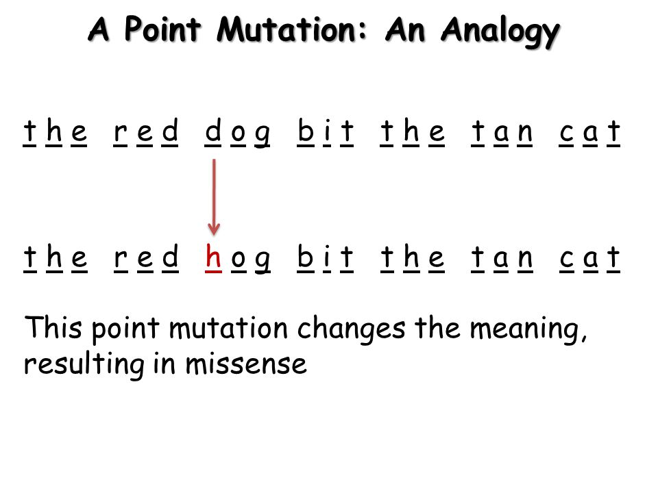 A Point Mutation: An Analogy t h e r e d d o g b i t t h e t a n c a t t h e r e d h o g b i t t h e t a n c a t This point mutation changes the meaning, resulting in missense