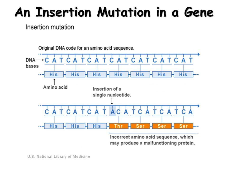 An Insertion Mutation: An Analogy t h e r e d d o g b i t t h e t a n c a t t h e r e d r d o g b i t t h e t a n c a This insertion mutation changes the reading frame