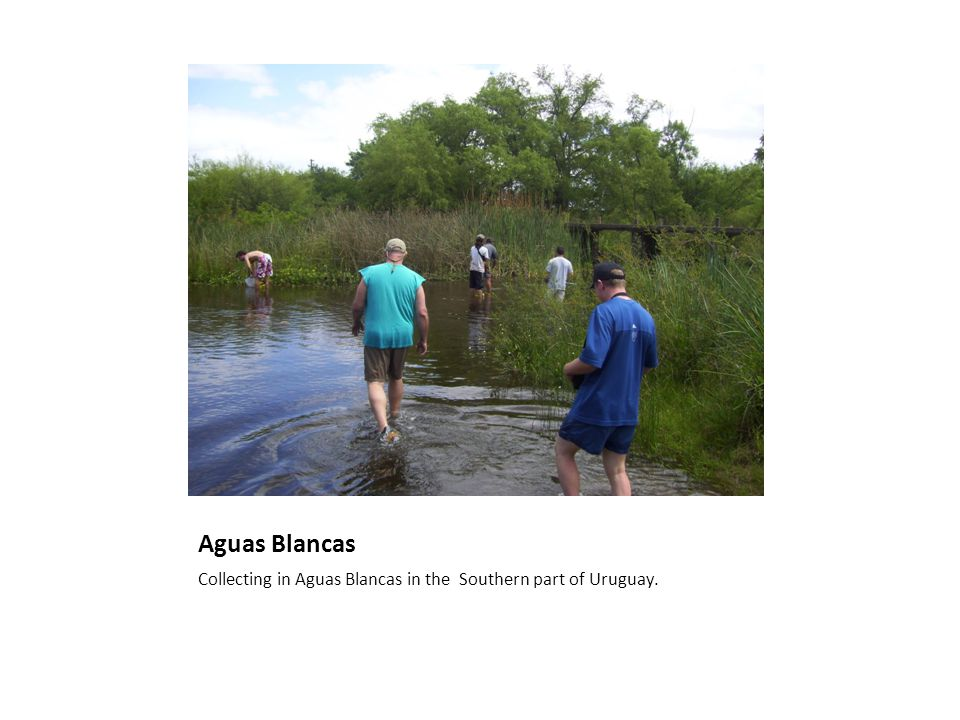 Aguas Blancas Collecting in Aguas Blancas in the Southern part of Uruguay.
