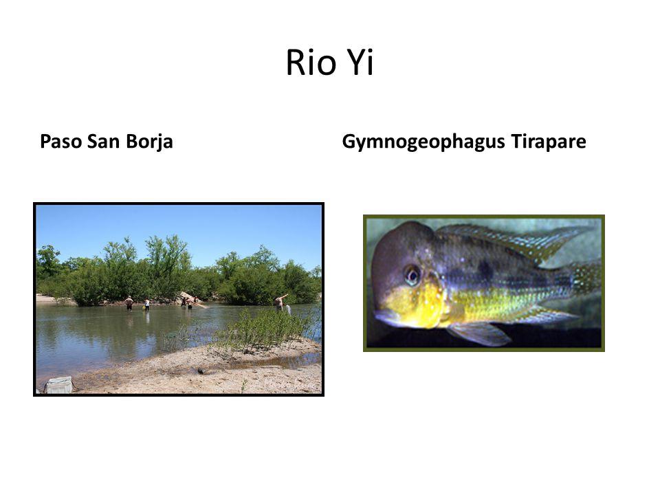 Rio Yi Paso San BorjaGymnogeophagus Tirapare