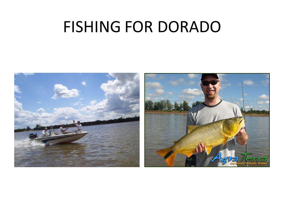 FISHING FOR DORADO