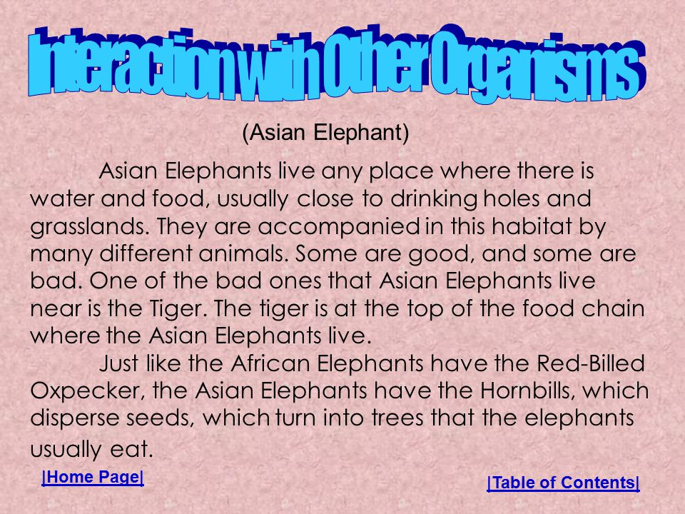 Asian Elephants live any place where there is water and food, usually close to drinking holes and grasslands.
