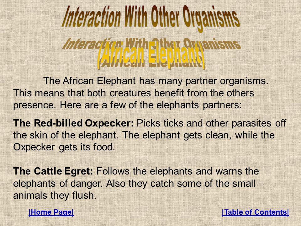The African Elephant has many partner organisms.