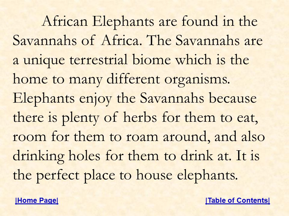 African Elephants are found in the Savannahs of Africa.