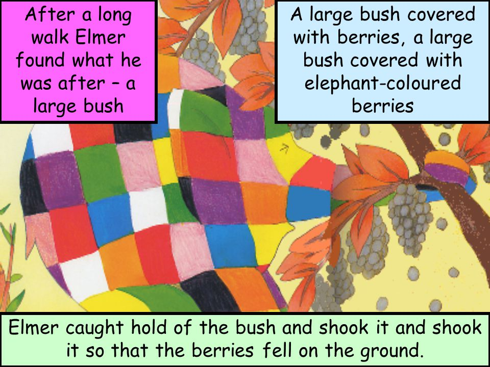 After a long walk Elmer found what he was after – a large bush A large bush covered with berries, a large bush covered with elephant-coloured berries