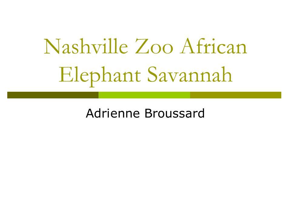 Nashville Zoo African Elephant Savannah Adrienne Broussard