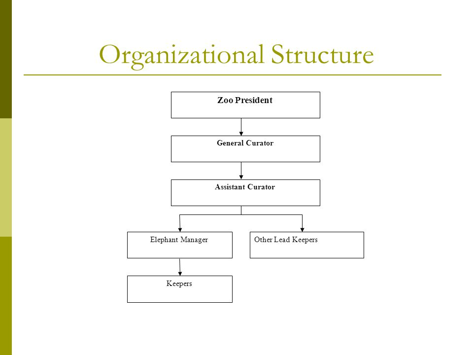 Organizational Structure Zoo President General Curator Assistant Curator Elephant ManagerOther Lead Keepers Keepers