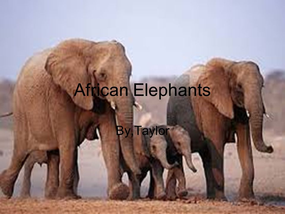 Physical Traits Trunks Tusks Tough Feet Tails