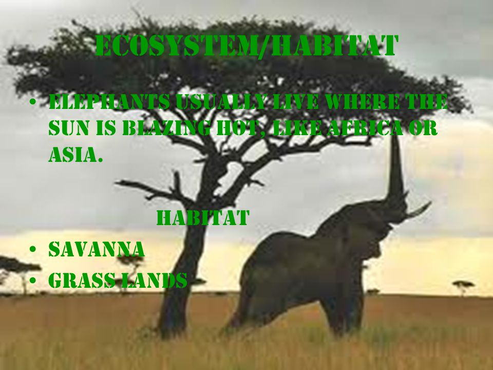 Ecosystem/Habitat Elephants usually live where the sun is blazing hot, like Africa or Asia.