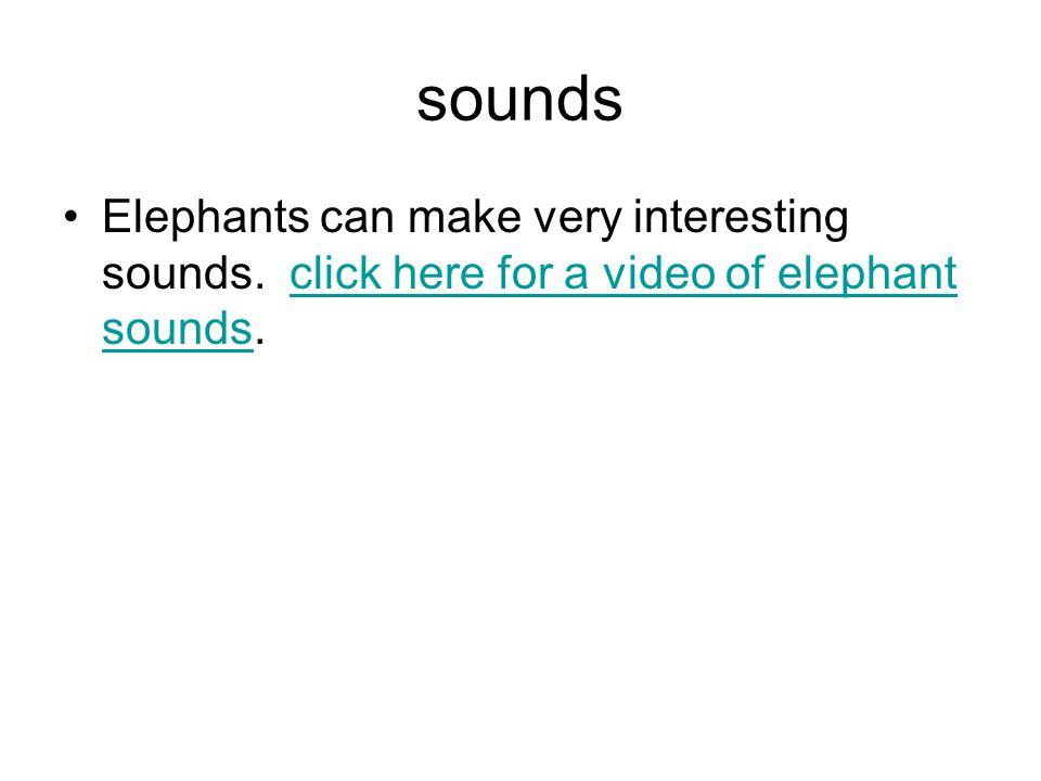 sounds Elephants can make very interesting sounds.