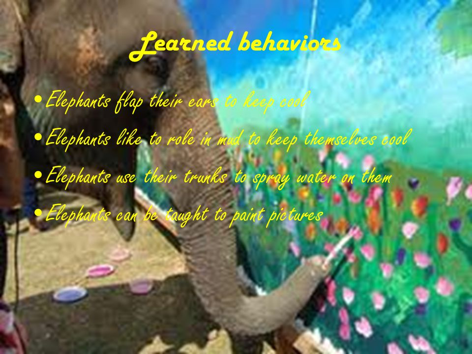 Inherited traits Elephants have trunks Elephants are very big Elephants have big ears Elephants have good memories and are very smart