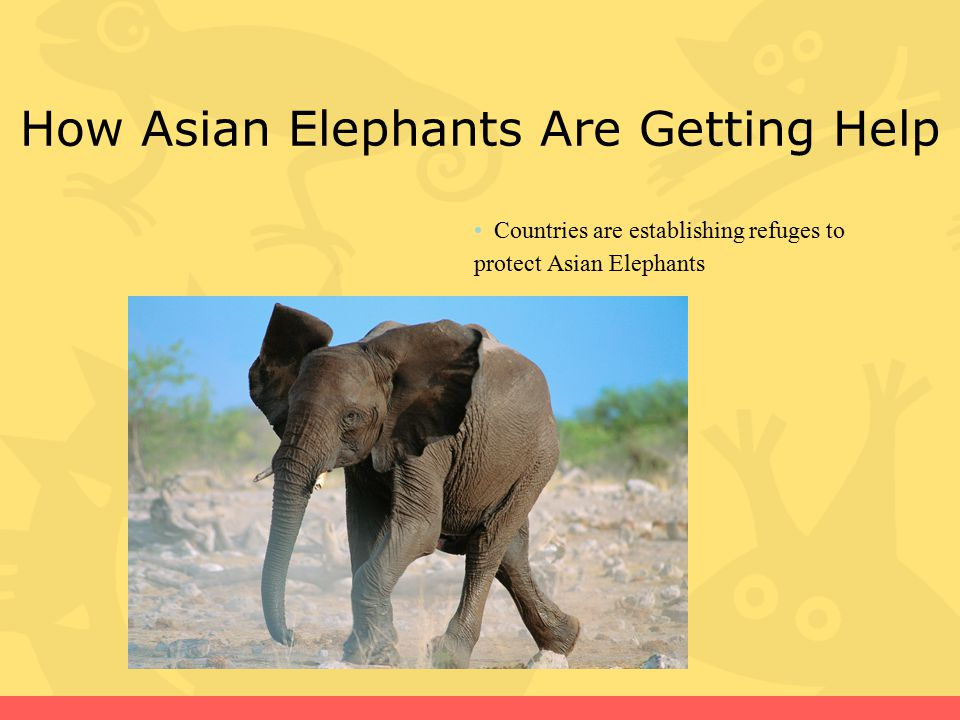 How Asian Elephants Are Getting Help Countries are establishing refuges to protect Asian Elephants
