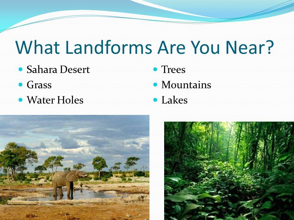 What Landforms Are You Near? Sahara Desert Grass Water Holes Trees Mountains Lakes