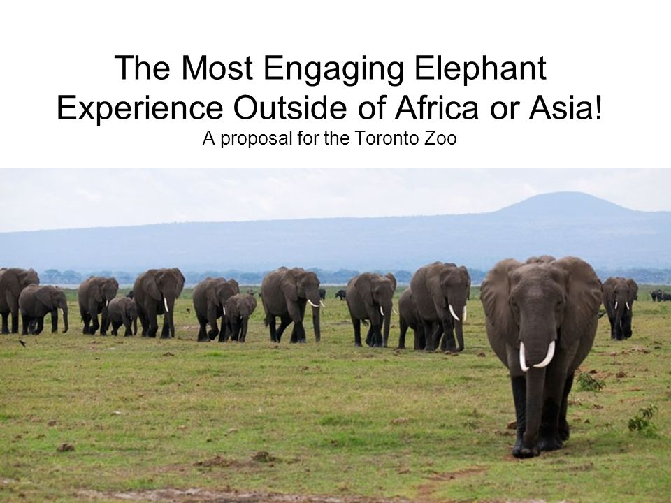 We Have an Opportunity to Build North America's Most Innovative and Engaging Elephant Experience in Toronto.