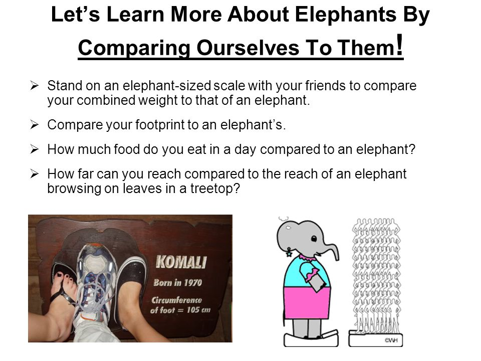 Let's Learn More About Elephants By Comparing Ourselves To Them .