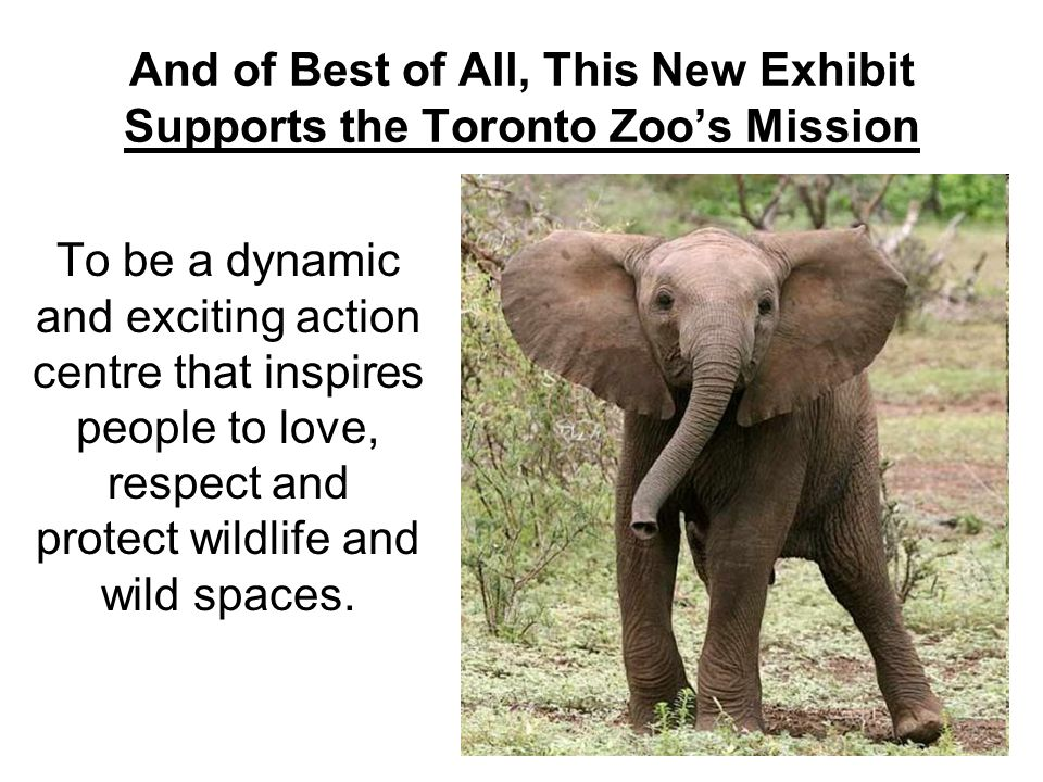 And of Best of All, This New Exhibit Supports the Toronto Zoo's Mission To be a dynamic and exciting action centre that inspires people to love, respect and protect wildlife and wild spaces.