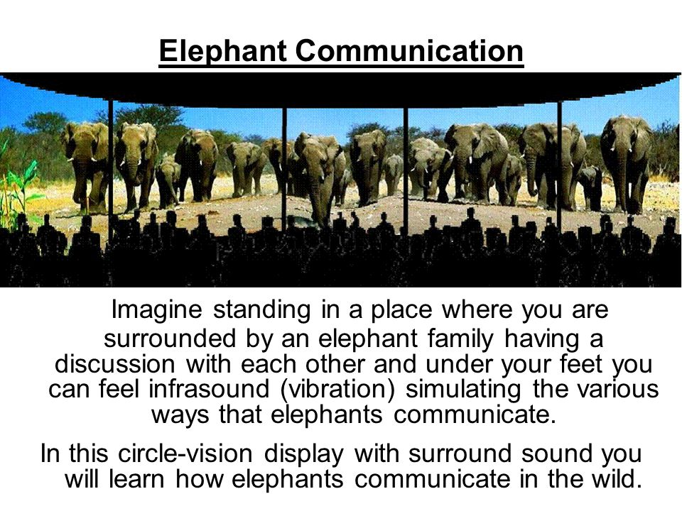 Let's open the way for new and exciting ideas for Torontonians to learn about elephants!