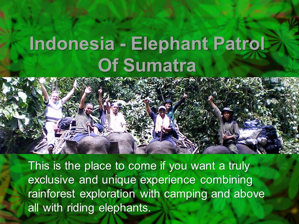 Indonesia - Elephant Patrol Of Sumatra This is the place to come if you want a truly exclusive and unique experience combining rainforest exploration with camping and above all with riding elephants.