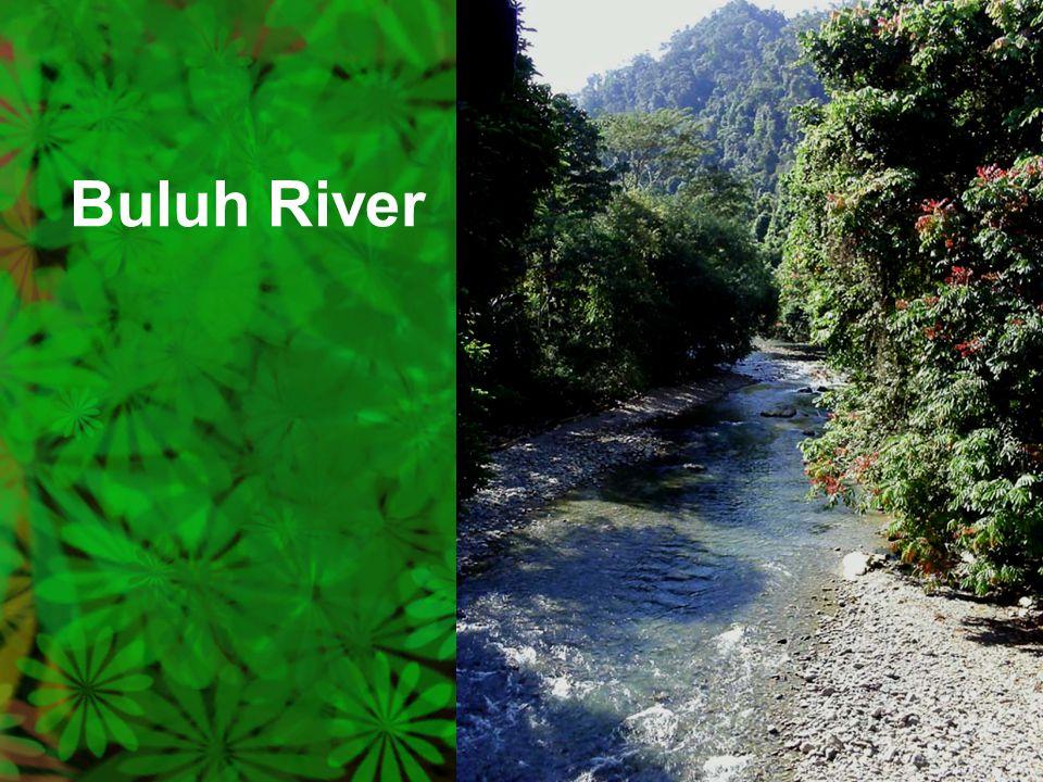 Buluh River