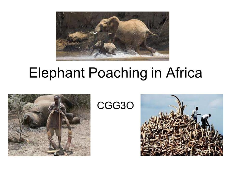 Elephant Poaching in Africa CGG3O