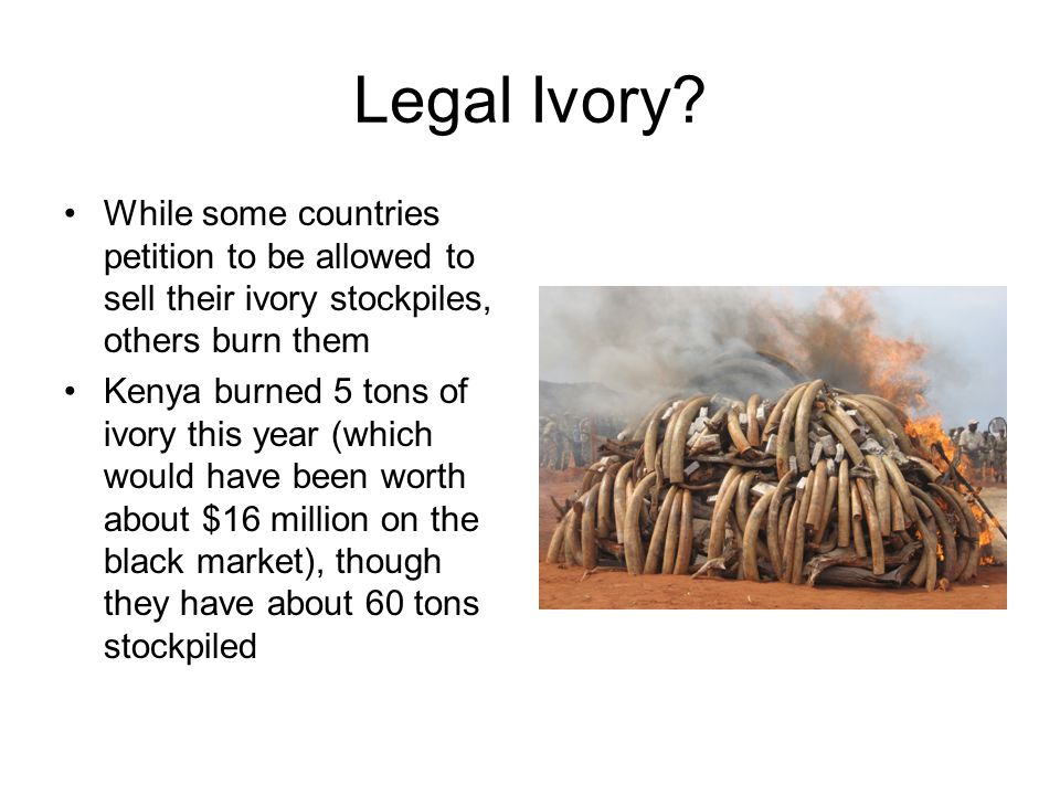 Legal Ivory.