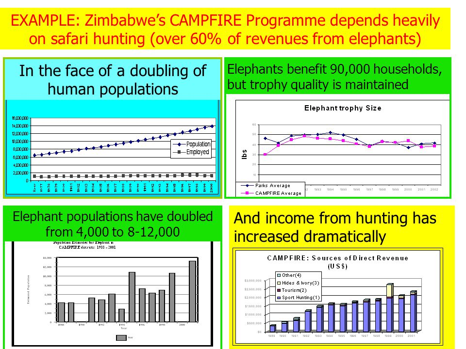 EXAMPLE: Zimbabwe's CAMPFIRE Programme depends heavily on safari hunting (over 60% of revenues from elephants) In the face of a doubling of human populations Elephant populations have doubled from 4,000 to 8-12,000 Elephants benefit 90,000 households, but trophy quality is maintained And income from hunting has increased dramatically