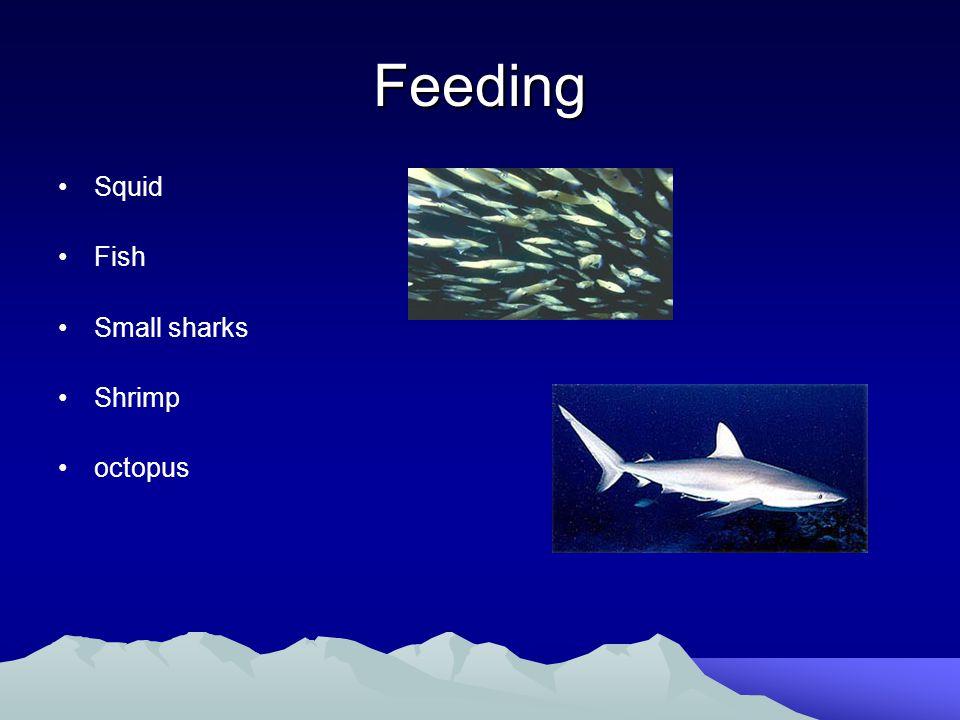Major Threats Exploited until 1964 Killer whales – Sharks Human disasters –fishing nets –Oil spill