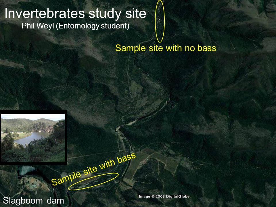Invertebrates study site Phil Weyl (Entomology student) Sample site with bass Sample site with no bass Slagboom dam